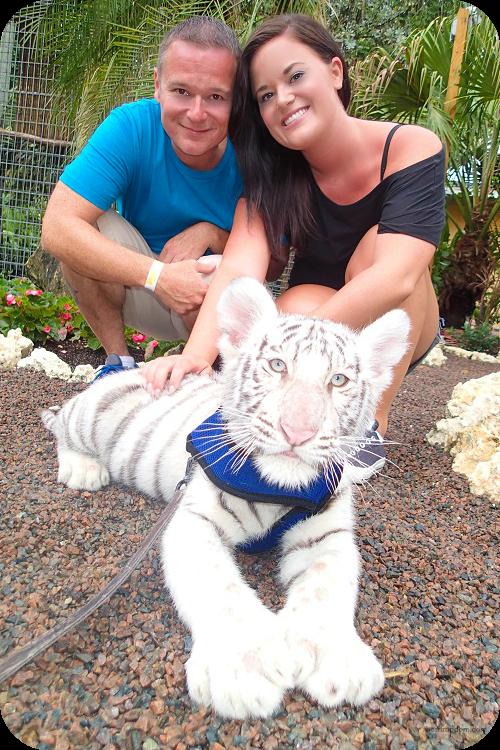 White Tiger Cub Playtime
