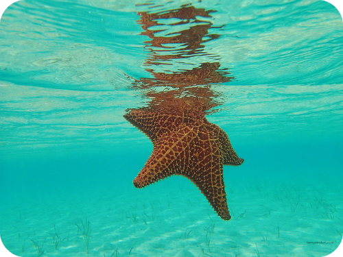 Starfish Great Exuma